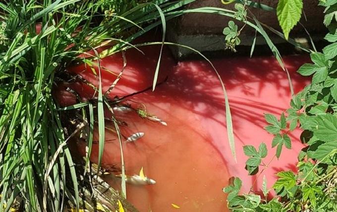 Под Киевом река стала красной от химикатов: появились фото