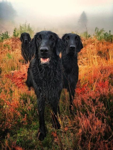 На престижному конкурсі обрали найкращі фото собак 2018 року: зворушливі кадри (7)