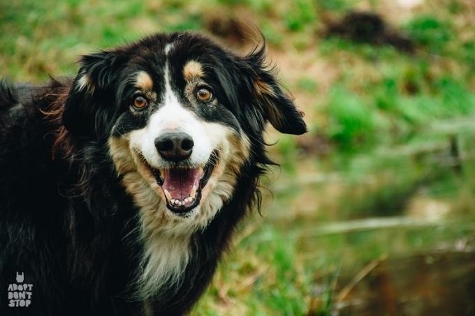 Найди друга: необыкновенные собаки ждут любящих хозяев (6)