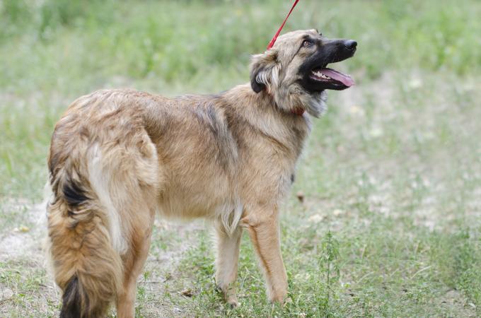 Найди друга: очаровательные собаки с нетерпением ждут своих новых хозяев (2)