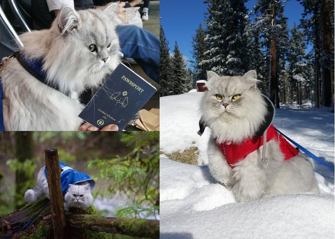 Кот-мандрівник Гендальф став новим улюбленцем користувачів Instagram (9 фото)