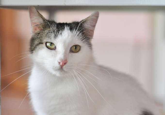 Найди друга: пушистые котики ждут любящих хозяев (3)