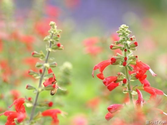 энциклопедия полевых растений с фото и названием скачать