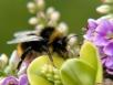 Как помочь начинающим пчеловодам