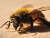 Февральские работы пчеловодов