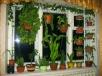 Как разместить цветы наподоконнике