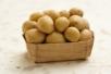 Летние посадки картофеля