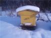 Как подготовить пчел кзиме