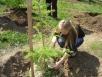 Чтобы деревья невымерзали