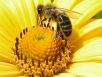Гибель пчел зимой