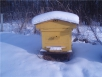 Пчел губит сырость