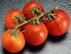 Посадите помидор...лёжа