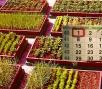 Народный календарь огородника