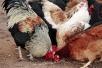 Питание животных зимой