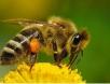 Двухматочное содержание пчёл