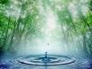 Вода вжизни животных
