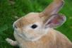 Мясо кролика полезно