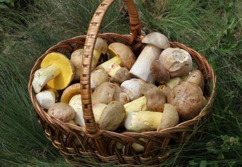 Заготовка грибов: сушить или замораживать