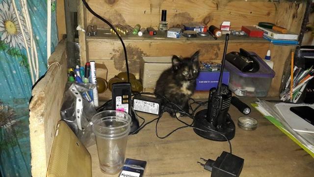 За що котам в АТО треба поставити пам'ятник-15 - фото 3
