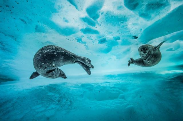 Подводное плавание в восточной Антарктиде