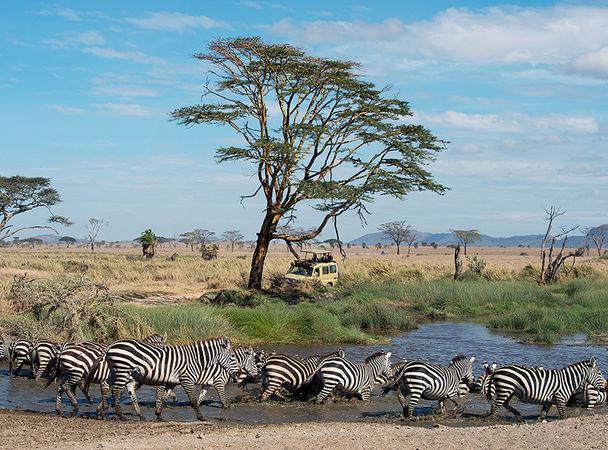 Зов природы: 10 направлений для сафари от NG Traveler