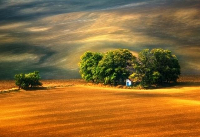 Оттенки золота. Автор: Krzysztof Browko.