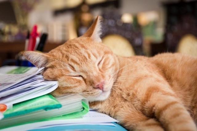 17 интересных фактов о кошках