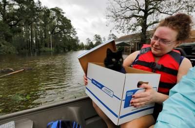 Как спасали животных во время урагана «Флоренс». Фото