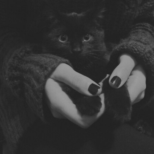 И почему их считают плохои приметои? .Мне неприятности приносят люди, а черные кошки добро и ... - 2