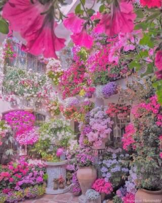 Цветочный рай в объективе японского фотографа-самоучки. Фото
