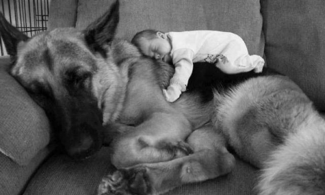 Ребенок и собака. Фото: mix.tn.kz
