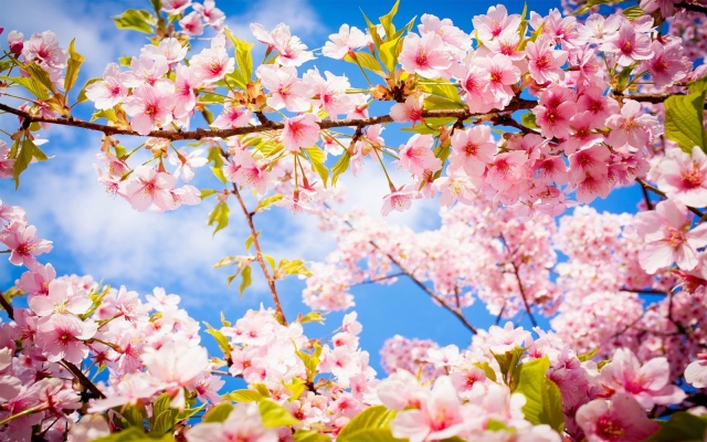 Картинки по запросу хороших весенних выходных апреля
