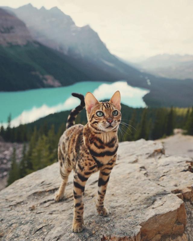 Фото: Кошка, которая путешествует по миру (Фото)