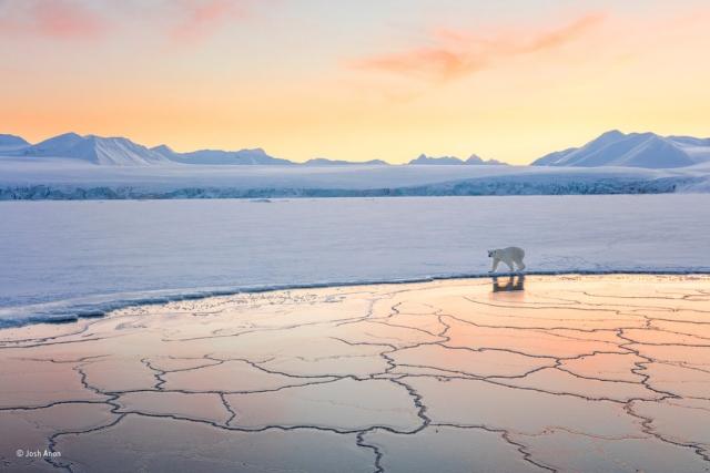 Земля снега и льда. Арктика прекрасна круглый год