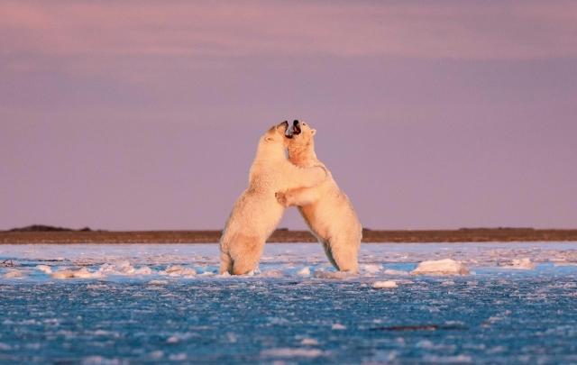 Медвежий вальс