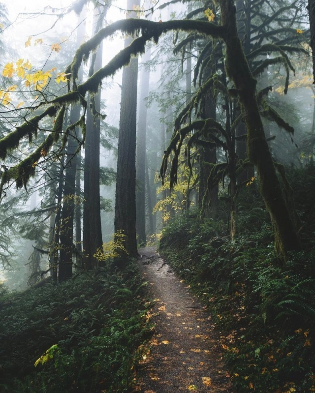 Фото: Лесная красота, которая помогает насладиться природой (Фото)