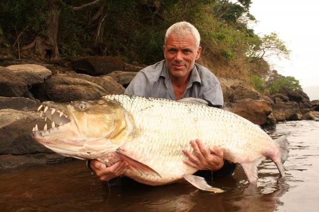 Большая тигровая рыба имеет огромные размеры.