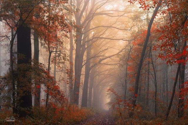 Красоты осеннего леса на фотографиях Янека Седлара