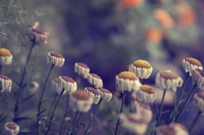 Природа в макроснимках талантливого американского фотографа. Фото