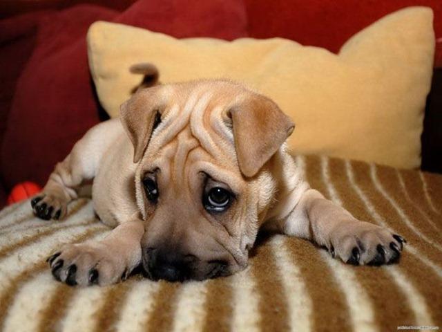 Как узнать, что щенок заболел?