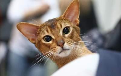 В Киеве открылась грандиозная выставка котов