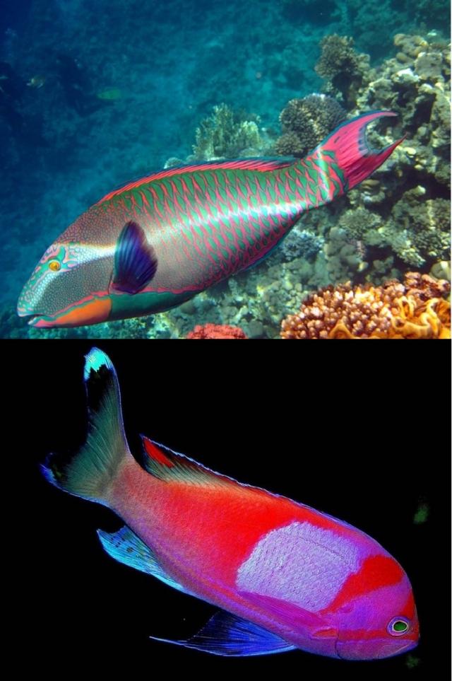 красивое фото рыбы