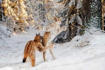 Лучшие снимки дикой природы, сделанные в разных уголках планеты. Фото