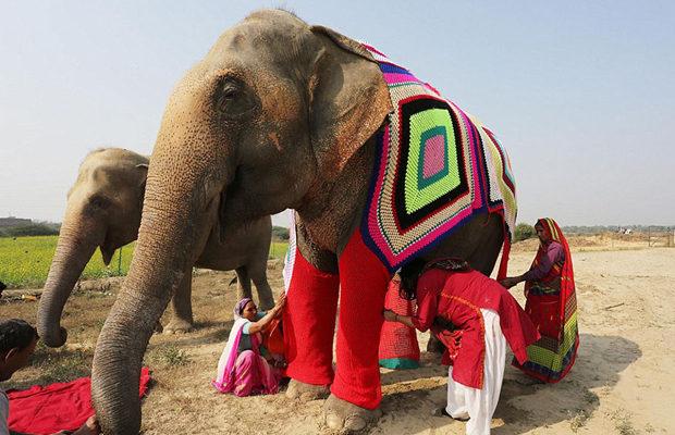 слоны_1
