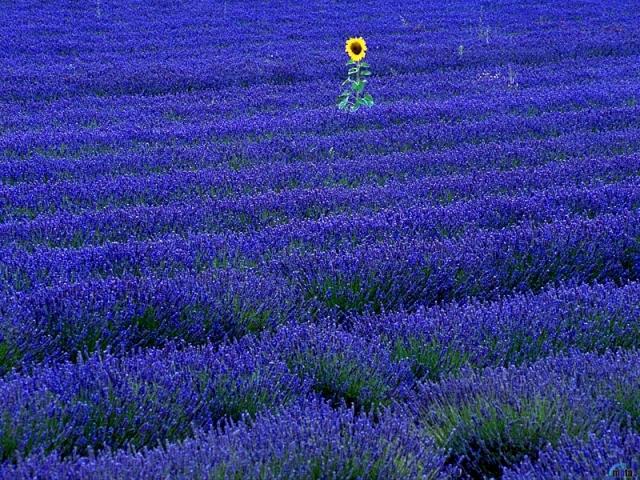 Фото: Романтичные пейзажи Прованса, в которые влюбляются все туристы (Фото)