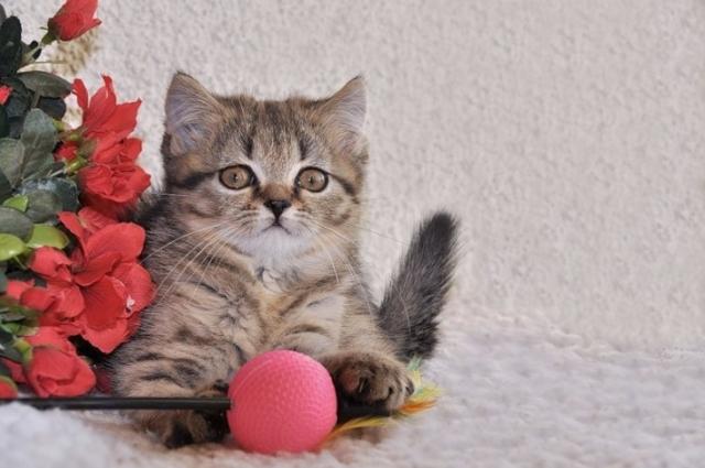 Милые пушистики. Котята в фотографиях Sylvie Meier