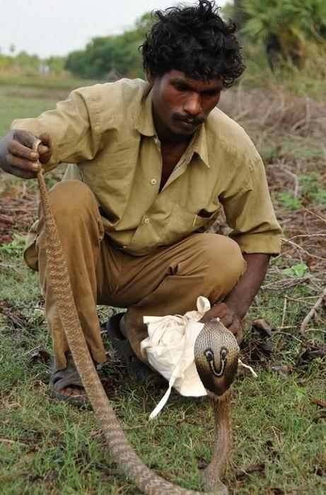 Охотник ирула с мешком для ловли змей. Фото: wildwildworld.net.ua