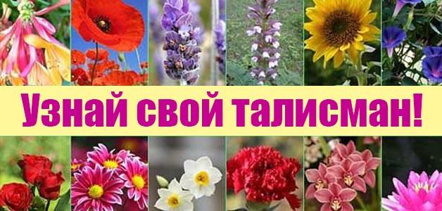"""Результат пошуку зображень за запитом """"Ваш цветочный талисман по знаку Зодиака -фото"""""""