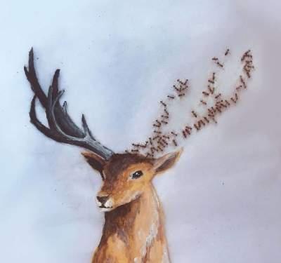 Художница создает удивительные рисунки с помощью живых муравьев. Фото