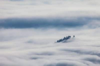 Утренние Карпаты в удивительных туманных снимках. Фото